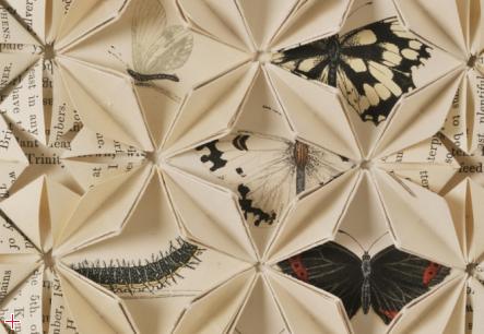 bf_butterflies_2_big_images