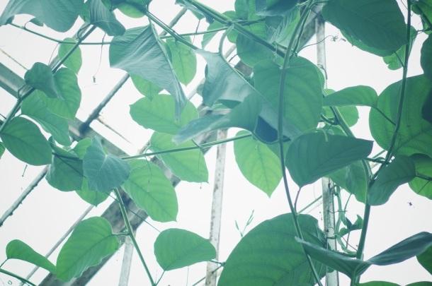 vine kew gardens
